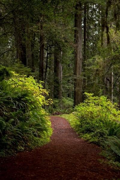 Redwood Hike1