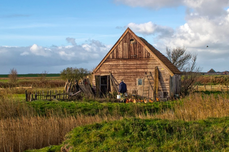 The oldest and most authentich chickenshed on the Island Texel. The farmer was feeding the chickens.