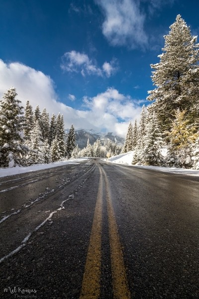 Fresh Snow on the Bow Valley Parkway