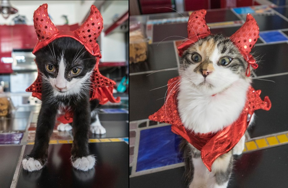Two of our new fashionable family members on Halloween 2017. Just had to do this. Poor kitties so embarrassed. :)