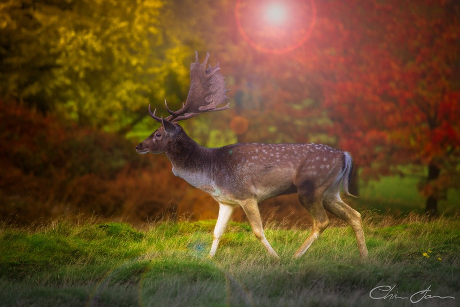 A long distance shot of a lonely deer on an autumn evening just as the sun started to set.