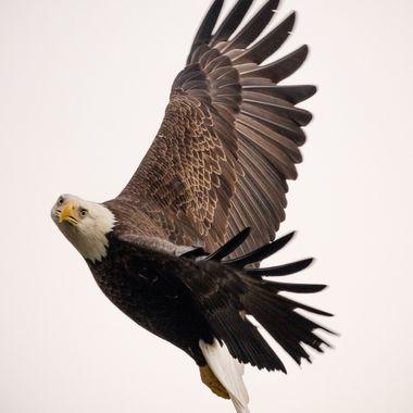 Eagle Turn