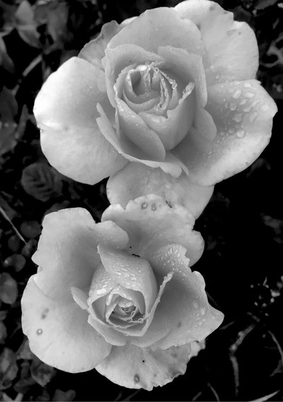 Black and White is as beauiful as color.