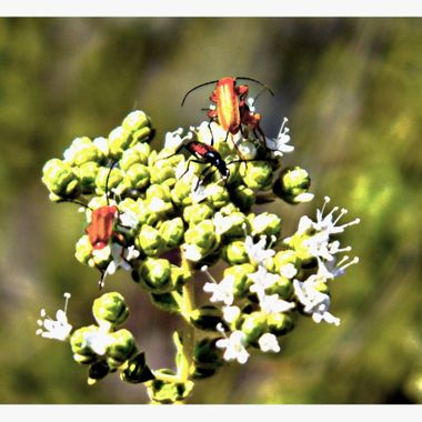 Bugs on some plant.