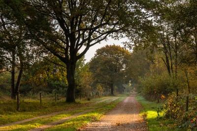 Autumn Path Sunlight