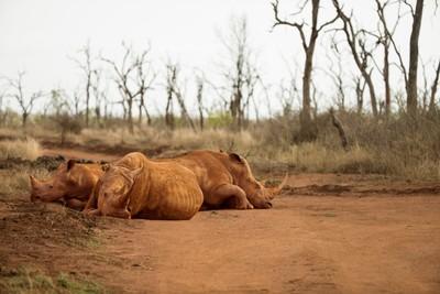 3 rhino, a crashed crash