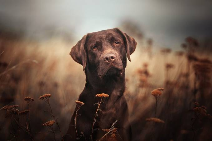 chocolate meets autumn by stadthunde-erfurt - Only Pets Photo Contest