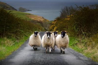 An Irish roadblock