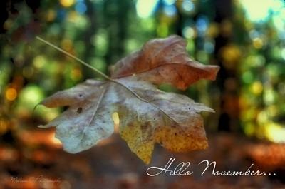 Happy November...