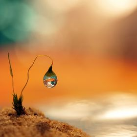 Even a humble moss seed with a drop of water can have a room with a view.