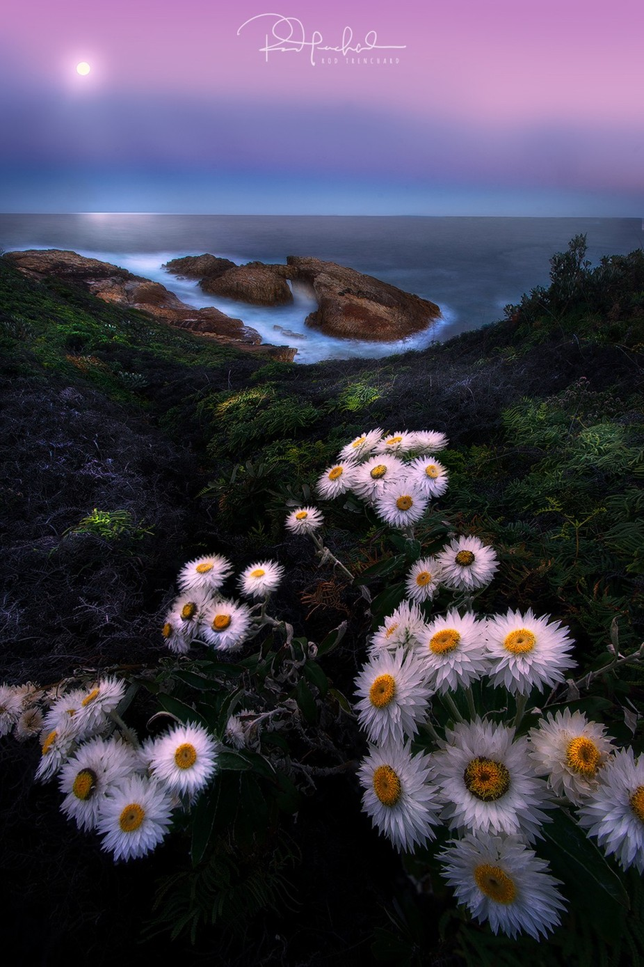 Dancing-at-dusk by rodneytrenchard - Beautiful Flowers Photo Contest