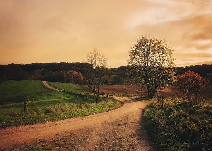 Autumn came, with wind and gold!  by sussicharlottealminde - A Road Trip Photo Contest