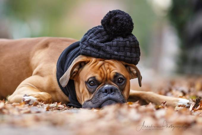by Anneliese-Photography - Only Pets Photo Contest