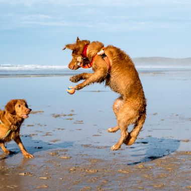 Gin'an and Tonica playing on Perranporth beach.