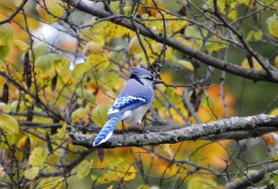 Autumn Jay