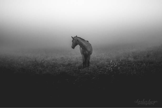 Foggy Morning by tylerfitz94 - Farms And Barns Animals Photo Contest