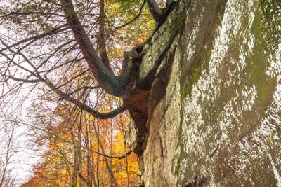 Overhanging Tree