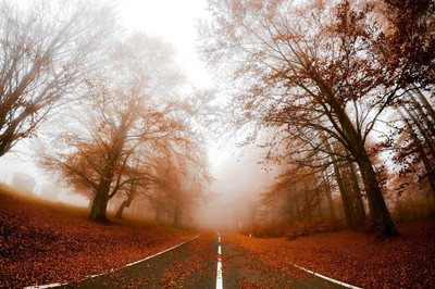 Road in fog
