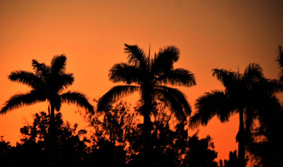 dawn over palm trees