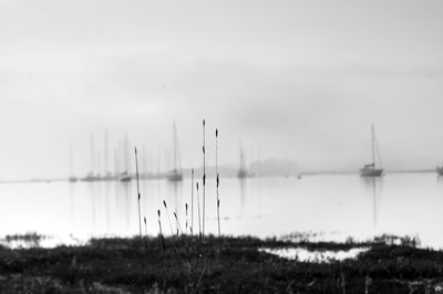 Reeds and Boats