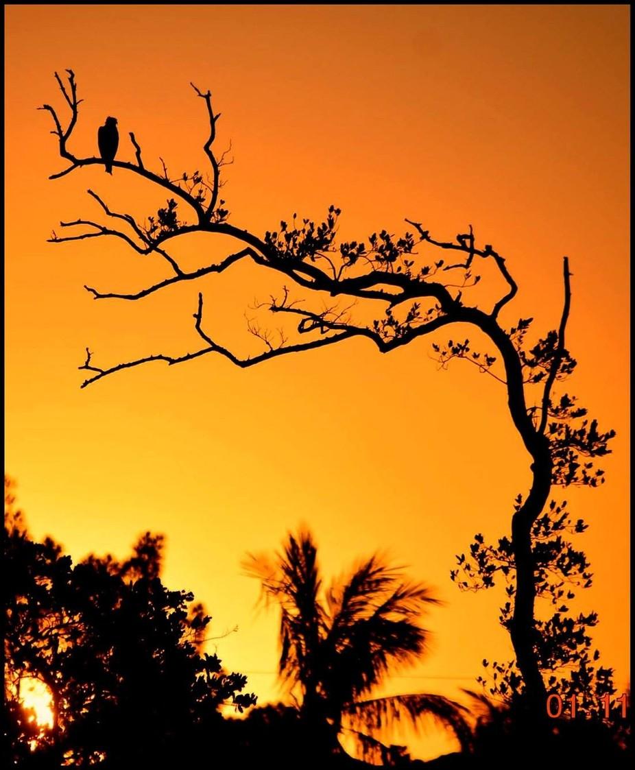 Bird on Tree limb sunrise on left