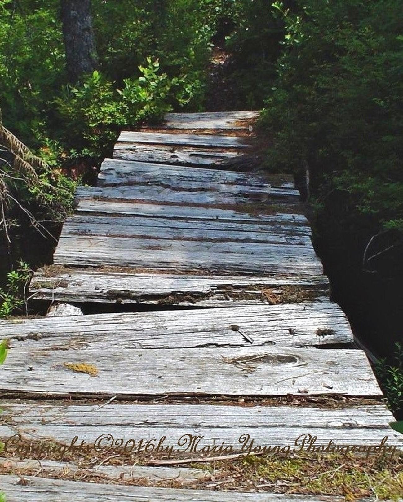 Sturdy Bridge