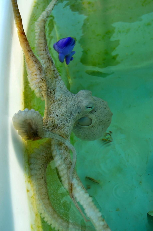 Octopus Farm 5
