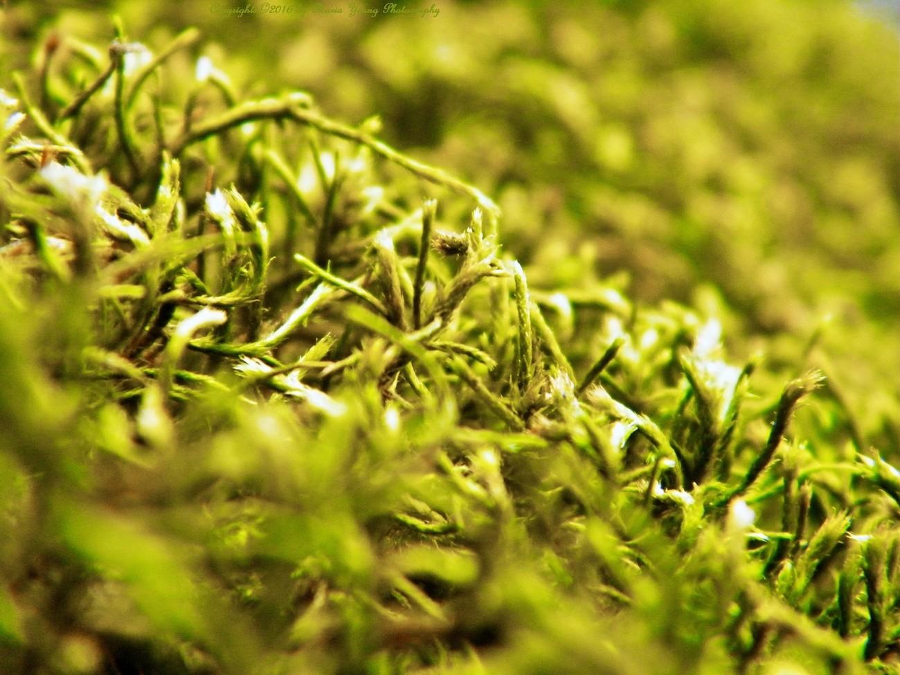 Green Living Cords