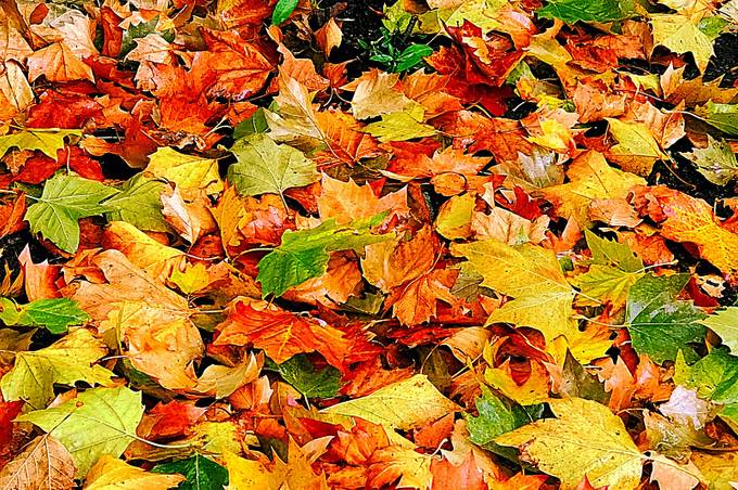 Leaves to scuff through!