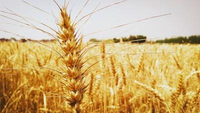 Farm Of Punjab