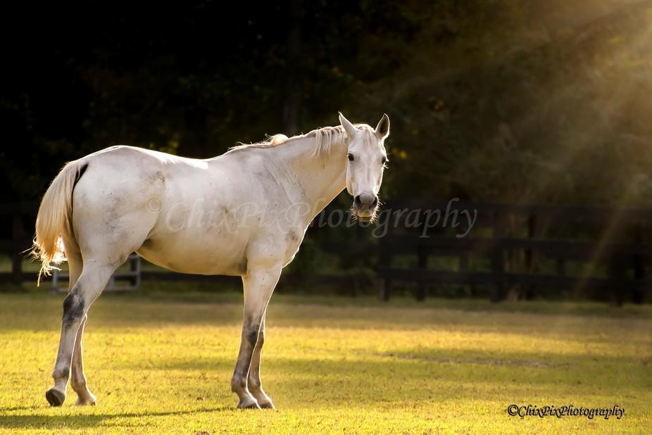 2017-09-30 Horse 35 WWM