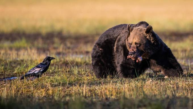 Did I ever invite you for dinner? by GunnarImages - Food Chain Struggles Photo Contest