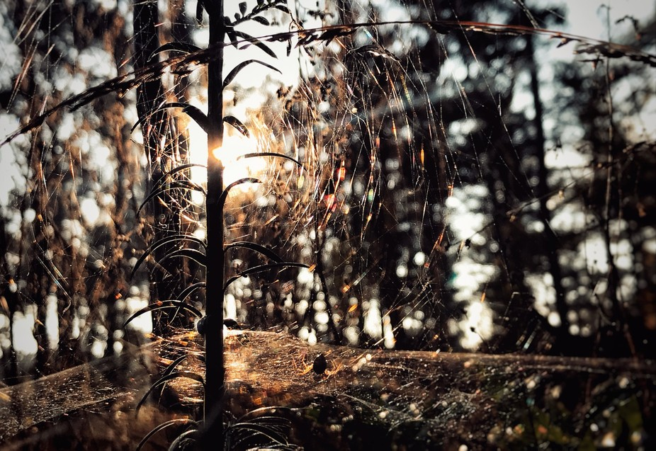 Spider in the forest