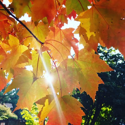 Fafall colors and sun beaming between the leaves.