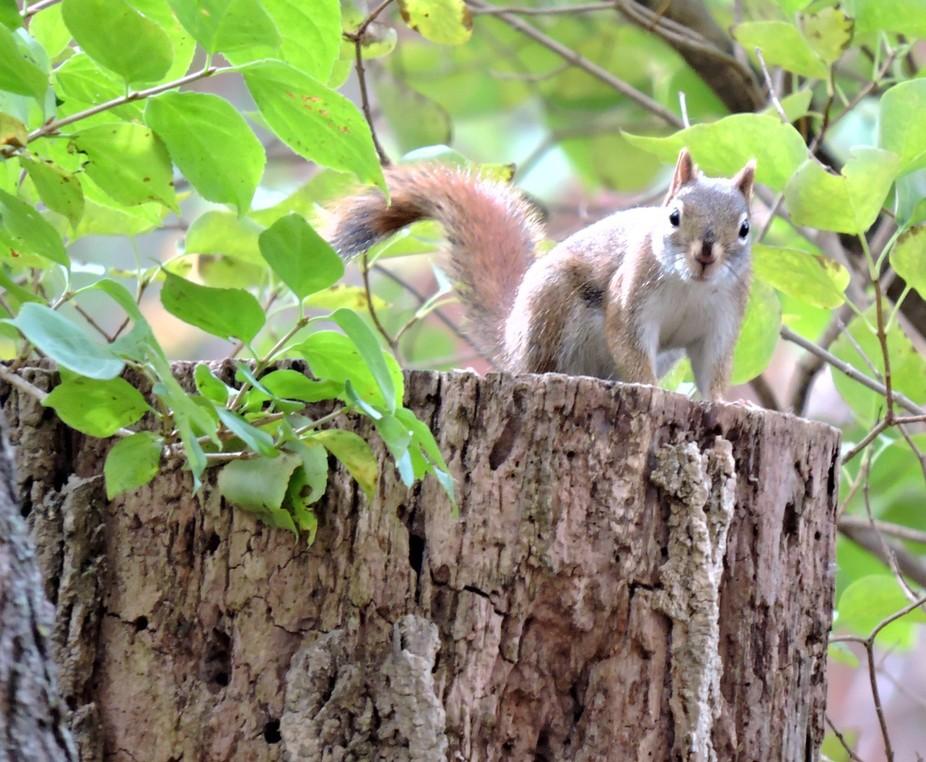 Curious nature