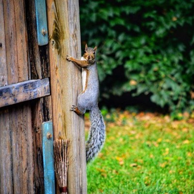 It's been all people and not enough squirrels lately. #squirrelsofinstagram #squirrelbff #squirrellove #squirellphotography #naturephotography #backyard #ilovesquirrels #lexingtonkentucky