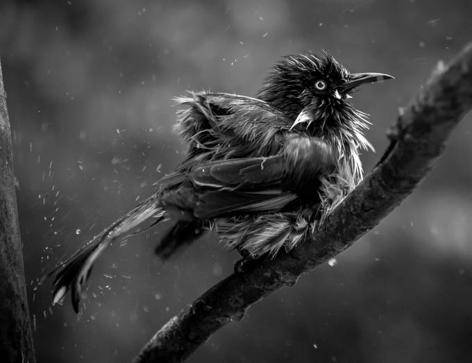 Shake it off!! by AshThomson - Showing Movement Photo Contest
