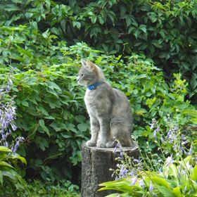 Cat on stump. On podium. It was amazing shot from my backyard)
