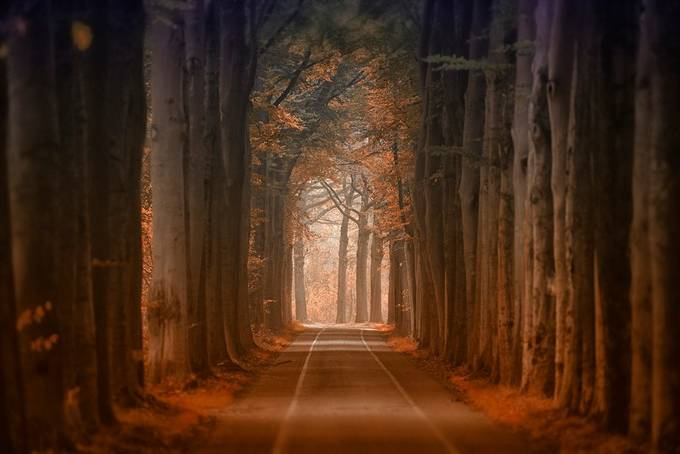 Autumn road by Fotomay1 - Covers Photo Contest Vol 42