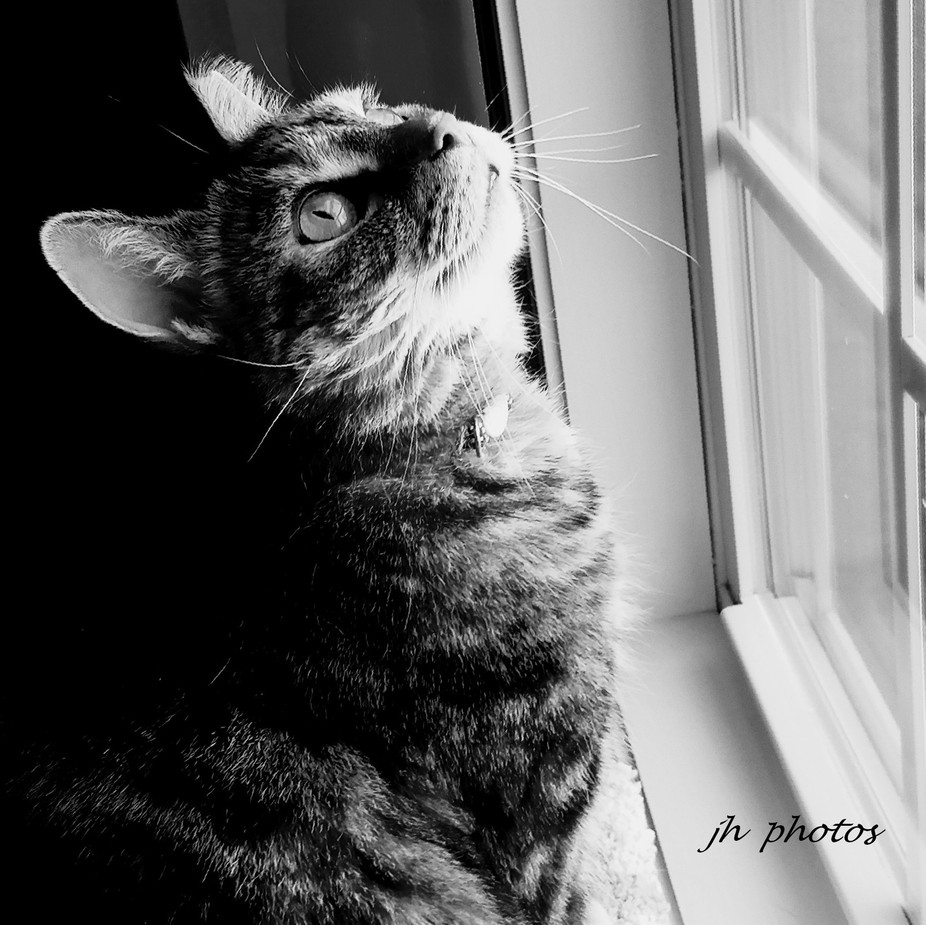 She loves sitting the window, watching the birds fly up on the gutter.