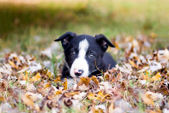 A Puppy Named Sue by tylerfitz94 - Covers Photo Contest Vol 42