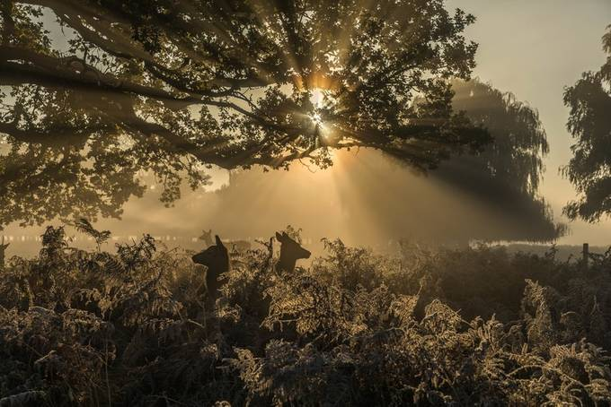 Autumn Frost by David_Photos_UK - Flares 101 Photo Contest