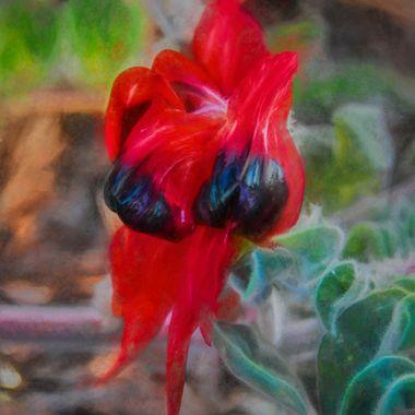 Sturt's Desert Pea (2) -Painting Impression
