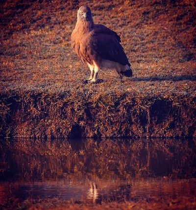 Eagle eyes, look at the way he stares at my lens Spotted! #wildernessculture #wildlifephotography #wildlife #travelPhotoGraphy #travelblogger #india #wonderful #landscape #destination #vacation #vsco #photo #igers #webstagram #instagramphotos #trip #view