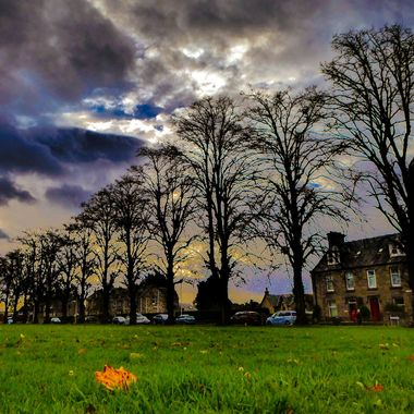 Spooky Forres Trees