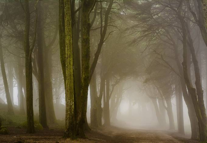 Foggy day by nunocandido - Depth In Nature Photo Contest
