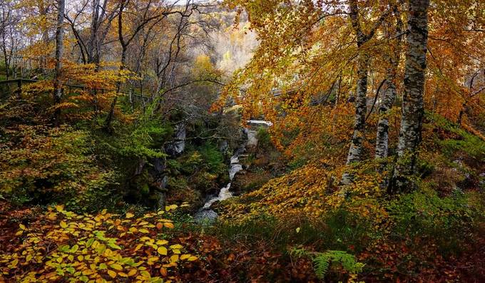 Autumn woodland by the Black Water, Contin, Scottish Highlands.  by davidscottrobson - Streams In Nature Photo Contest