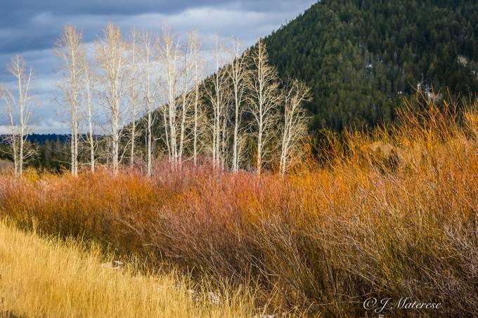 Colorful Brush Surrounding the Aspens