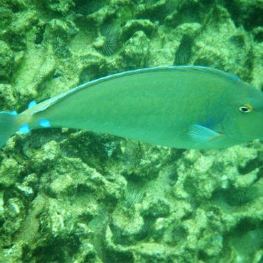 Shot in Kauai while snorkeling Fuji Finepix Z33WP
