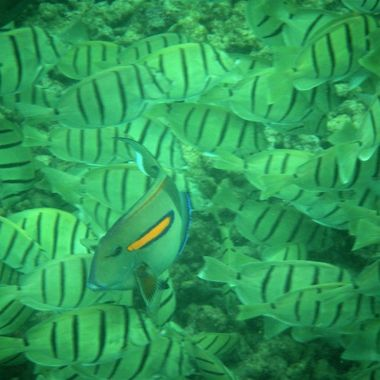 Shot while snorkeling in Kauai  Fuji Finepix Z33WP